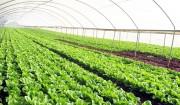 Đồng Nai ký kết hợp tác về nông nghiệp với Israel