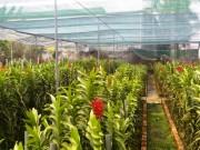 TP. Hồ Chí Minh đẩy mạnh phát triển nông nghiệp đô thị