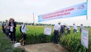 Sắp diễn ra Festival quốc tế nông nghiệp vùng Đồng bằng sông Cửu Long