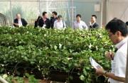 Hợp tác đầu tư nông nghiệp Việt – Nhật mở ra nhiều cơ hội lớn