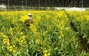 Lâm Đồng mở ra nhiều cơ hội thu hút đầu tư nông nghiệp công nghệ cao