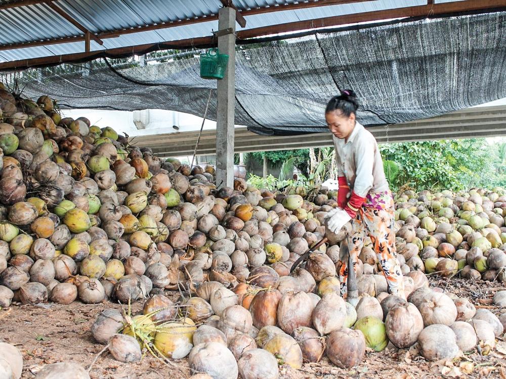 Giá thực phẩm hôm nay 4/3: Giá rau củ đi ngang, giá dừa thô tăng mạnh