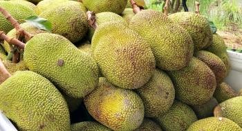 Giá thực phẩm ngày 25/3: Giá rau xanh và một vài loại trái cây quay đầu tăng