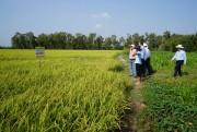 Tuần lễ an ninh lương thực APEC sẽ diễn ra tại TP Cần Thơ