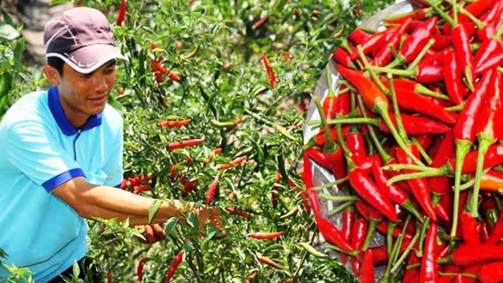 Giá thực phẩm ngày 21/4: Giá rau xanh đi ngang, ớt tăng giá mạnh
