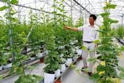 TP. Hồ Chí Minh với 4 nhiệm vụ phát triển doanh nghiệp khoa học và công nghệ