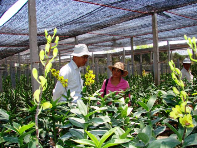 Nông nghiệp đô thị TP. Hồ Chí Minh phát triển bền vững và hiệu quả