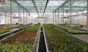 TP Hồ Chí Minh: Xúc tiến đầu tư các khu nông nghiệp công nghệ cao