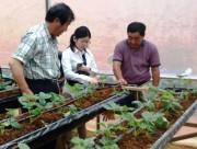 Đẩy mạnh hợp tác nông nghiệp Việt Nam – Nhật Bản
