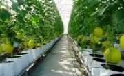 Tăng cường đáp ứng yêu cầu an toàn thực phẩm nông sản xuất khẩu