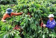 Xuất khẩu cà phê hướng đến bền vững