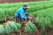 Một số mặt hàng nông sản đồng bằng song Cửu Long tăng giá