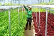 Bà Rịa - Vũng Tàu đẩy mạnh phát triển nông nghiệp ứng dụng công nghệ cao