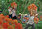 Chôm chôm tại đồng bằng sông Cửu Long được giá