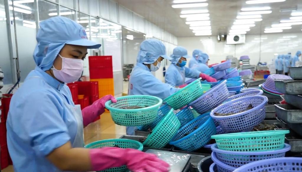Năm 2020, ngành tôm Cà Mau sẽ có nhiều kỳ vọng xuất khẩu sang thị trường châu Âu