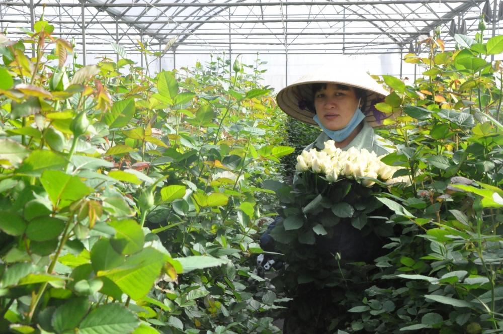 """Lâm Đồng: Giá hoa """"nhảy múa"""" dịp 8/3"""