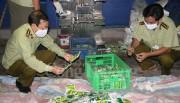 TP. Hồ Chí Minh phát hiện số lượng lớn hóa chất và phân bón kinh doanh trái phép