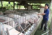 Đồng Nai: Siết chặt quản lý trong ngành chăn nuôi heo