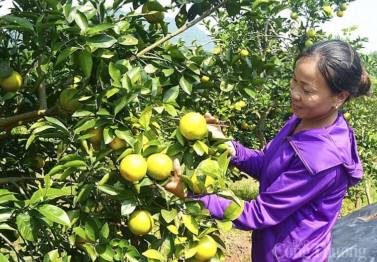 Sản phẩm OCOP - Góp phần khẳng định vị thế nông sản địa phương