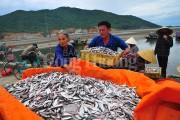 Hoạt động khai thác, xuất khẩu thủy hải sản Hà Tĩnh phục hồi sau hai năm sự cố môi trường biển