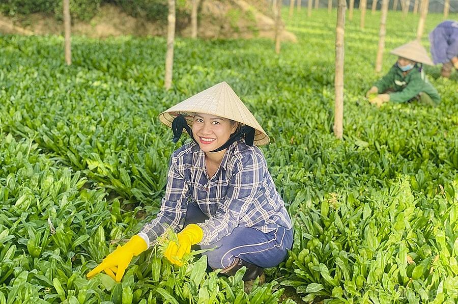 Nghệ An: Sản phẩm OCOP rộng đường xuất khẩu