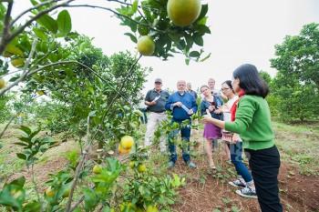 Nghệ An quy hoạch vùng sản xuất nông nghiệp ứng dụng công nghệ cao
