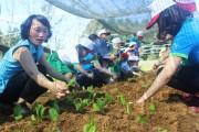 Hữu cơ Huế Việt - Khởi nghiệp từ tâm