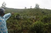 Quảng Nam: Tan giấc mộng 'vàng trắng' từ dự án cao su