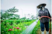 Đà Nẵng- Tất bật cho chợ hoa Tết