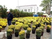 Đà Nẵng sôi động chợ hoa Tết