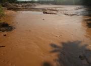 Vụ vỡ đập ở mỏ vàng Bồng Miêu: Cá chết hàng loạt là do nhiều nguồn thải