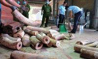 phat hien container chua gan 10 tan nga voi chau phi cap cang da nang