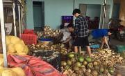Quảng Nam: Phát hiện cơ sở dùng hóa chất tẩy trắng vỏ dừa