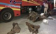 Quảng Nam:  Phát hiện xe khách vận chuyển hơn 800kg gỗ lậu trong đêm
