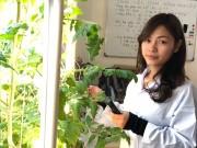 Nông nghiệp thông minh- Hướng đi bền vững