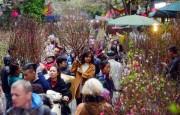 Hà Nội tổ chức 63 điểm chợ hoa xuân dịp Tết Mậu Tuất