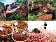 Xuất khẩu nông sản đạt 4,2 tỷ USD 2 tháng đầu năm