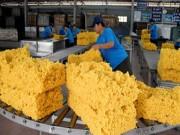 Xuất khẩu nông lâm thủy sản tháng 1/2017 đạt 2,54 tỷ USD