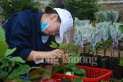 Năm 2017 sẽ đào tạo nghề nông nghiệp cho 290.430 người