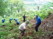 Hỗ trợ trồng rừng bền vững tại Việt Nam
