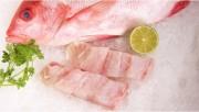 Hai lô hàng thủy sản Việt Nam bị EU cảnh báo về độc tố Ciguatera