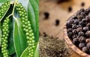 Giải đáp nguyên nhân giá nhiều mặt hàng nông sản xuất khẩu chủ lực giảm mạnh
