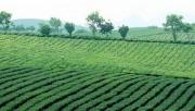 Triển khai thí điểm Bộ Chỉ số giám sát quản lý và sử dụng đất