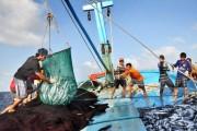 EC xem xét 'thẻ vàng' thủy sản Việt Nam trong tháng 5/2018