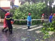 Hà Nội: Đã giải tỏa gần 400 trường hợp cây đổ sau bão số 1