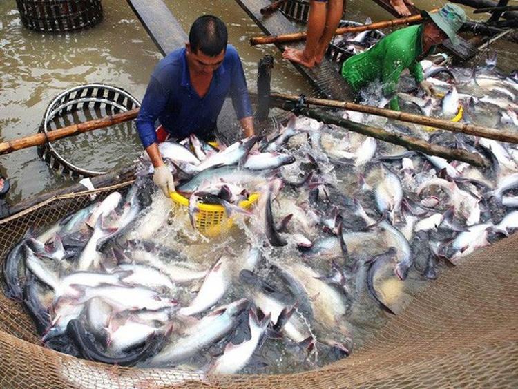"""Ngành cá tra tìm cách """"chinh phục"""" thị trường nội địa"""