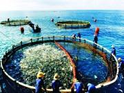 Tăng cường kiểm soát sử dụng kháng sinh trong chăn nuôi và nuôi trồng thủy sản