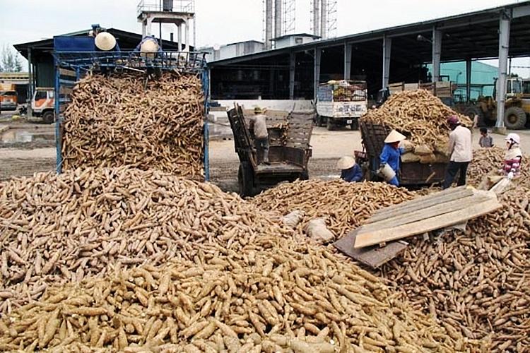 Quý I/2021: Xuất khẩu sắn và sản phẩm sắn tăng mạnh