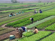 Hà Nội đầu tư gần 73.000 tỷ đồng cho khu vực nông thôn giai đoạn 2016-2020
