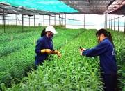 Hà Nội ứng dụng công nghệ cao trong sản xuất nông nghiệp còn khiêm tốn